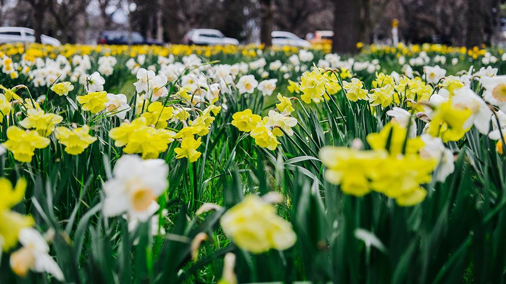 Christchurch Botanic Gardens Tours - Historic Botanic Gardens